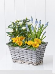 Sunny Planted Basket