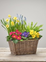 Bold Brights Planted Basket